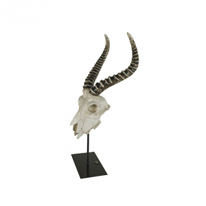Antelope skull Authentic Models